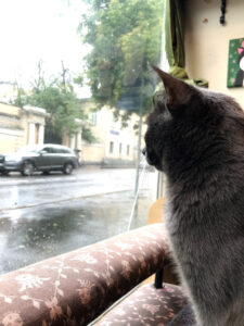 Coffee shops in Moscow cats